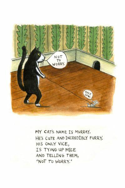 B toons my cat murray
